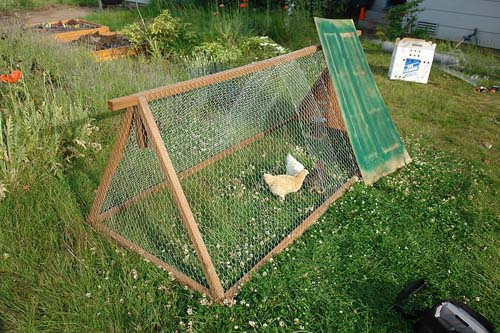 Chicken tractor on an one acre farm